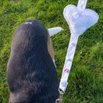 White Lace Dog Wedding Lead and Collar